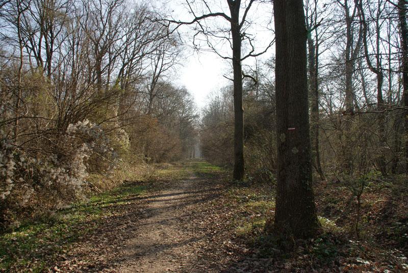 Balade en forêt de Ferrière (77 limite 94) **vidéos p7 et p20** 1er%20chelin