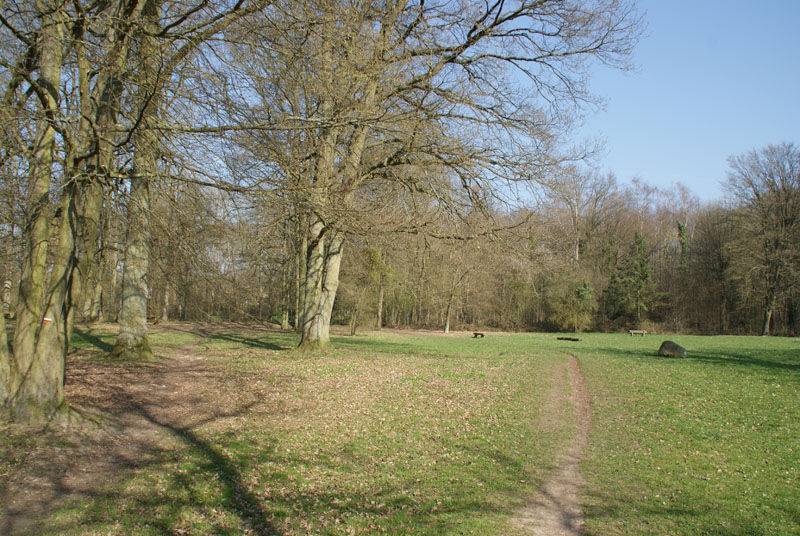 Balade en forêt de Ferrière (77 limite 94) **vidéos p7 et p20** Betty