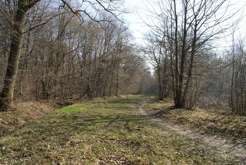 Balade en forêt de Ferrière (77 limite 94) **vidéos p7 et p20** Chemin%20pelouse