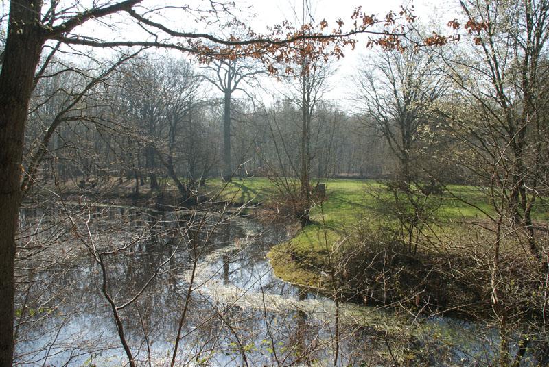 Balade en forêt de Ferrière (77 limite 94) **vidéos p7 et p20** Clairiere